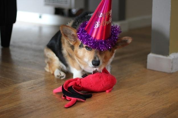 birthdays16