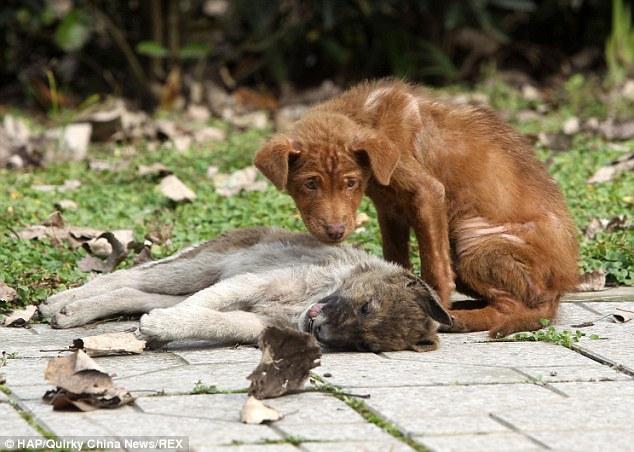 loyal-puppy2