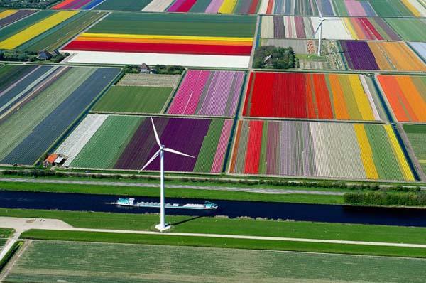 11-Tulip-Fields-The-Netherlands