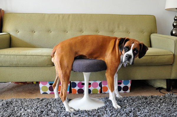 5clss-pets-furniture