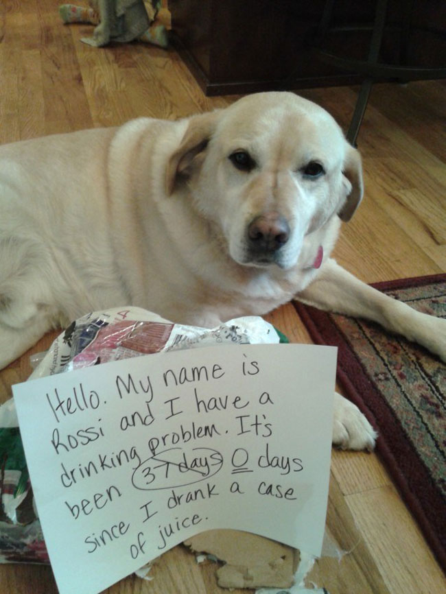 dogs-who-are-shamelessly-proud-of-what-they-just-did-17