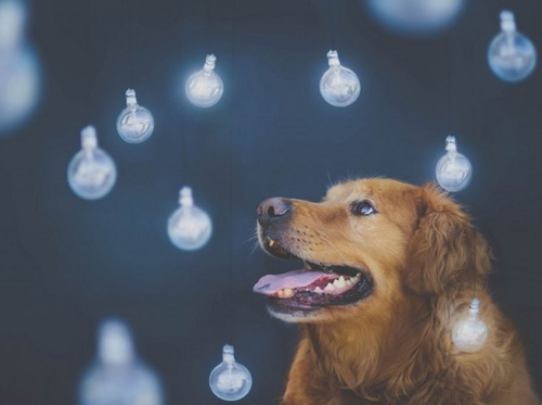 fotogenhund5
