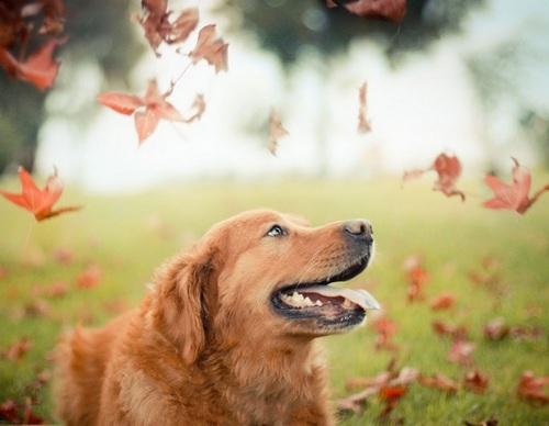 fotogenhund6