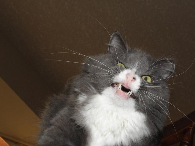 kattenys8