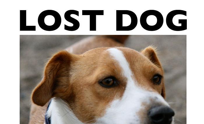 savnet-hund
