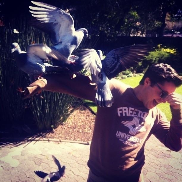 pigeons11
