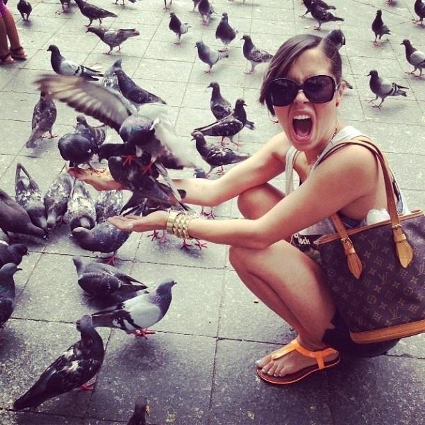 pigeons13