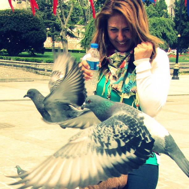 pigeons20