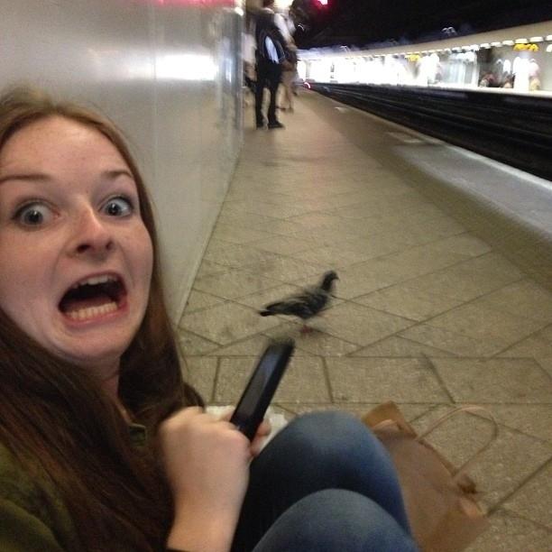 pigeons8