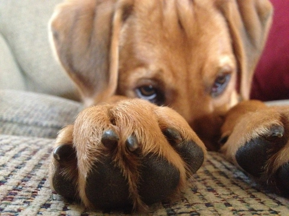 skyldig_hund (10)
