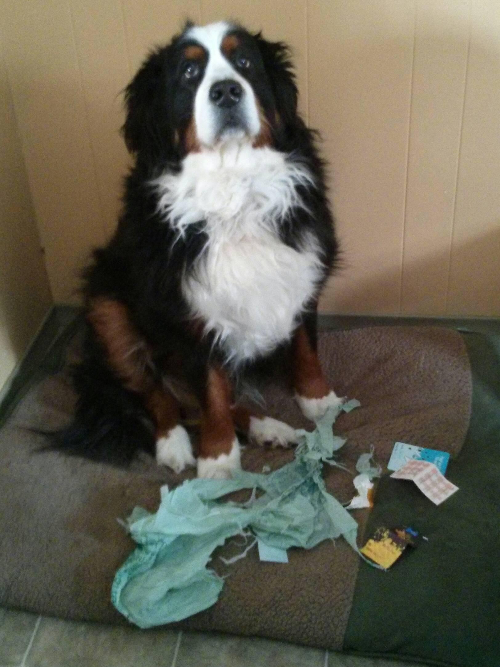 skyldig_hund (9)