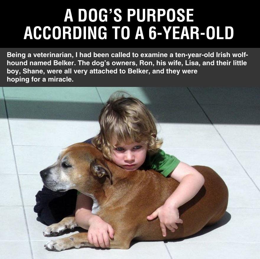 cool-dog-purpose-according-little-kid