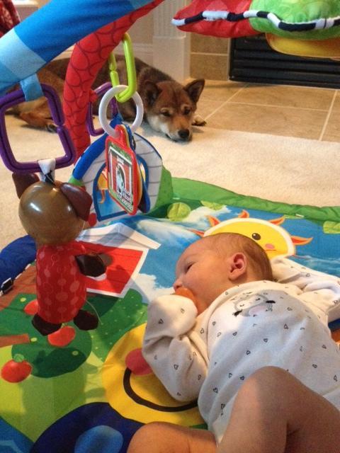 hund-baby4