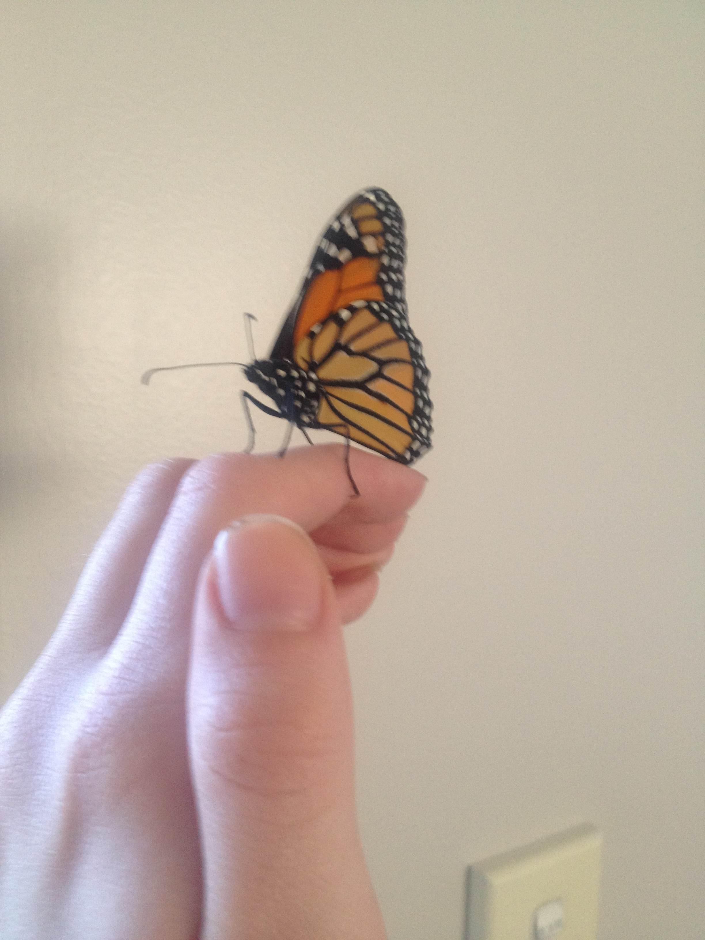 butterfly_pet_11
