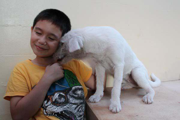 filipino-dogs10