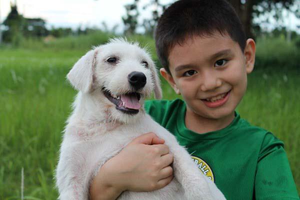 filipino-dogs11