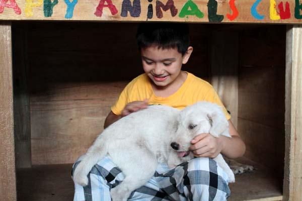 filipino-dogs12