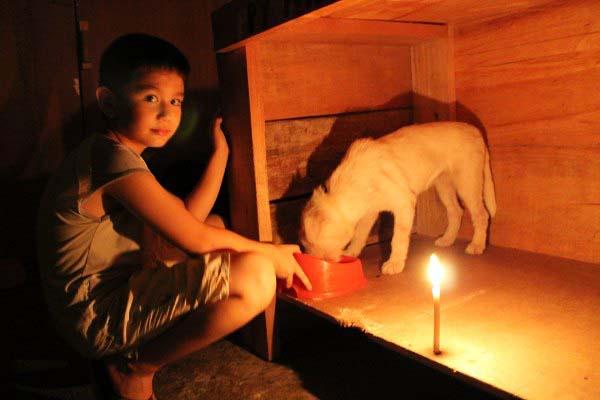filipino-dogs15