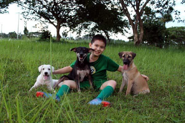 filipino-dogs6
