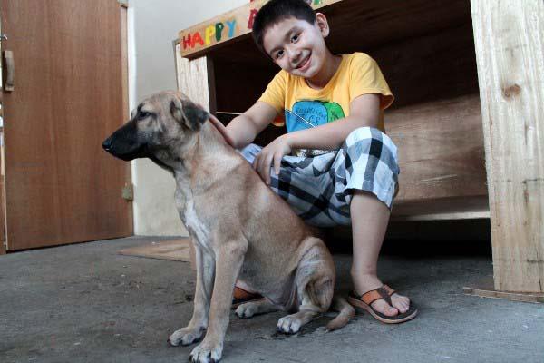 filipino-dogs9