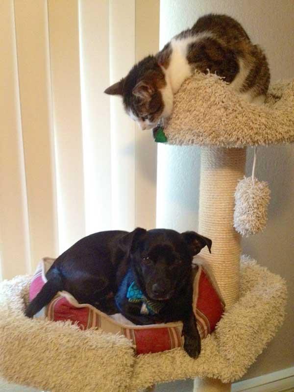 hunder-liker-katteting (4)