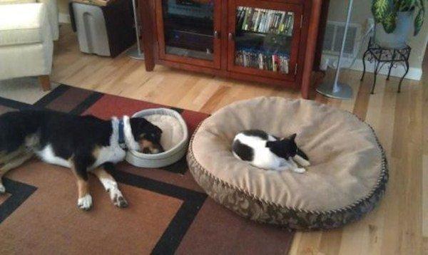 hunder-liker-katteting (6)