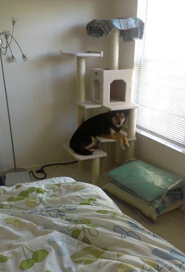 hunder-liker-katteting (7)