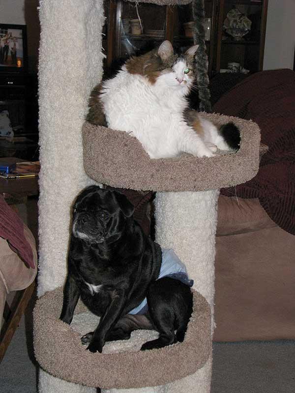 hunder-liker-katteting (9)