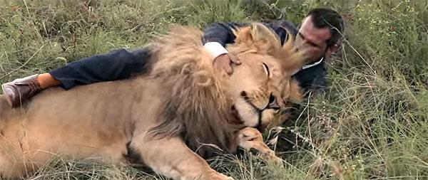 lion (8)