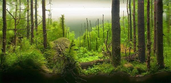 water-forest2