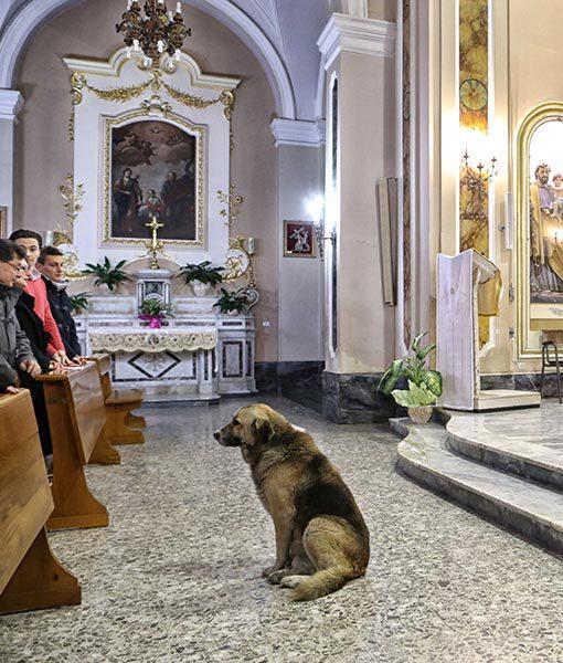 dog-mass2