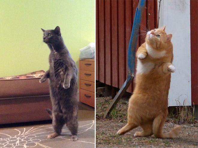 oppreiste katter (1)