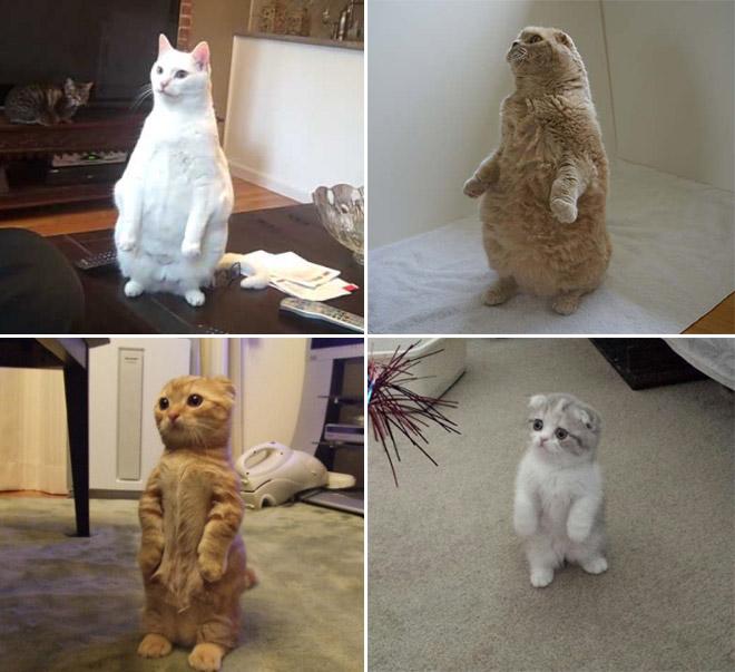 oppreiste katter (11)
