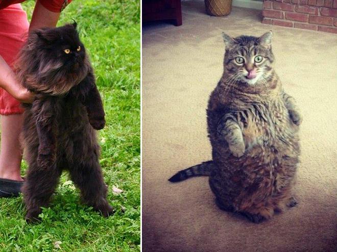 oppreiste katter (5)