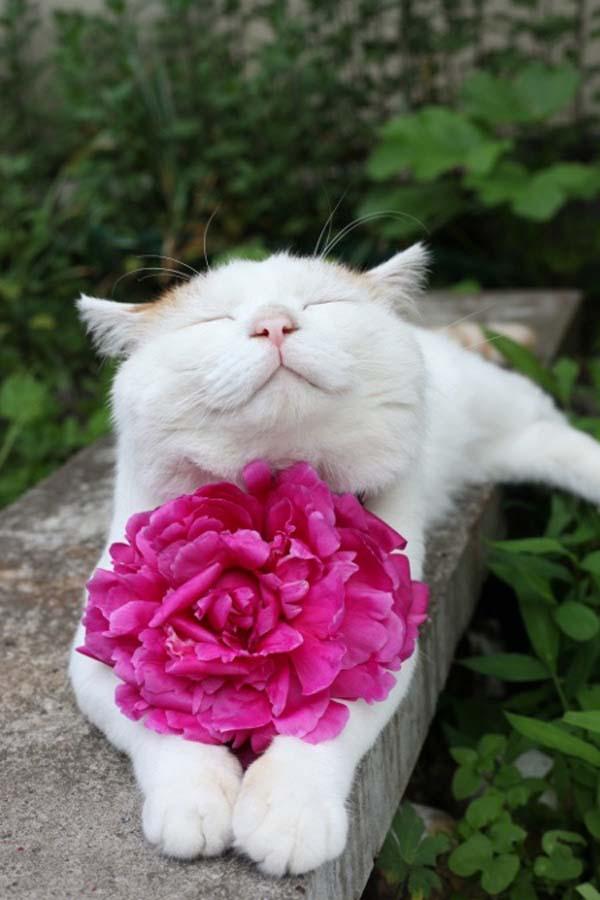 zen-cat2