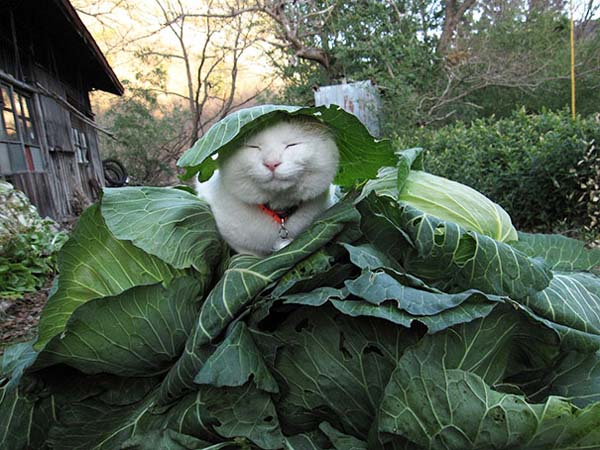 zen-cat4