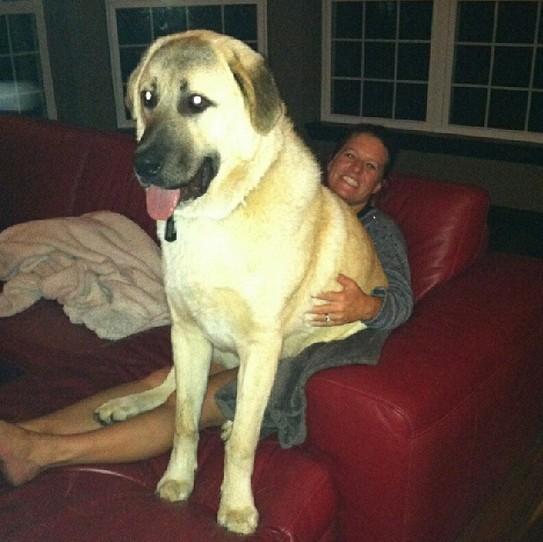 hund (10)