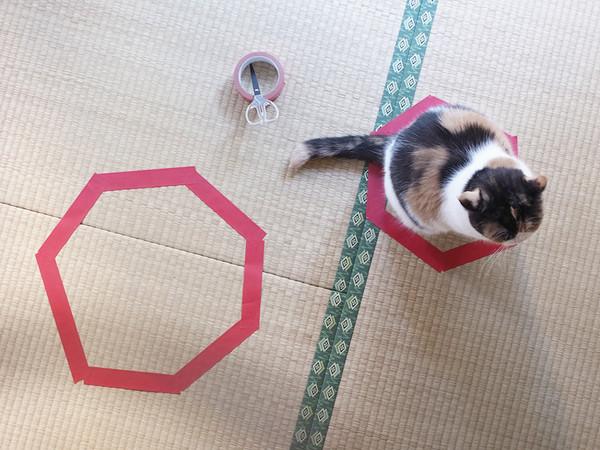 kattefelle10