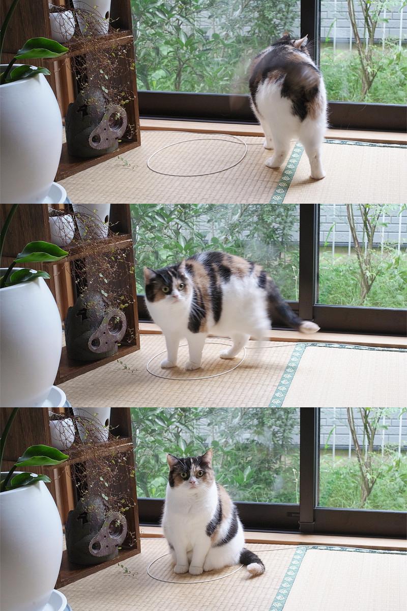 kattefelle2
