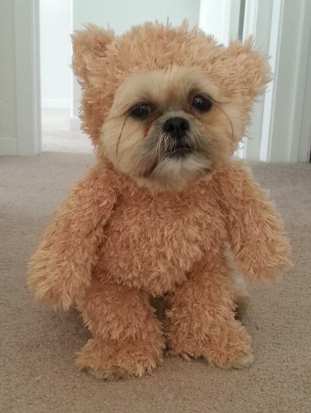 teddyhund5