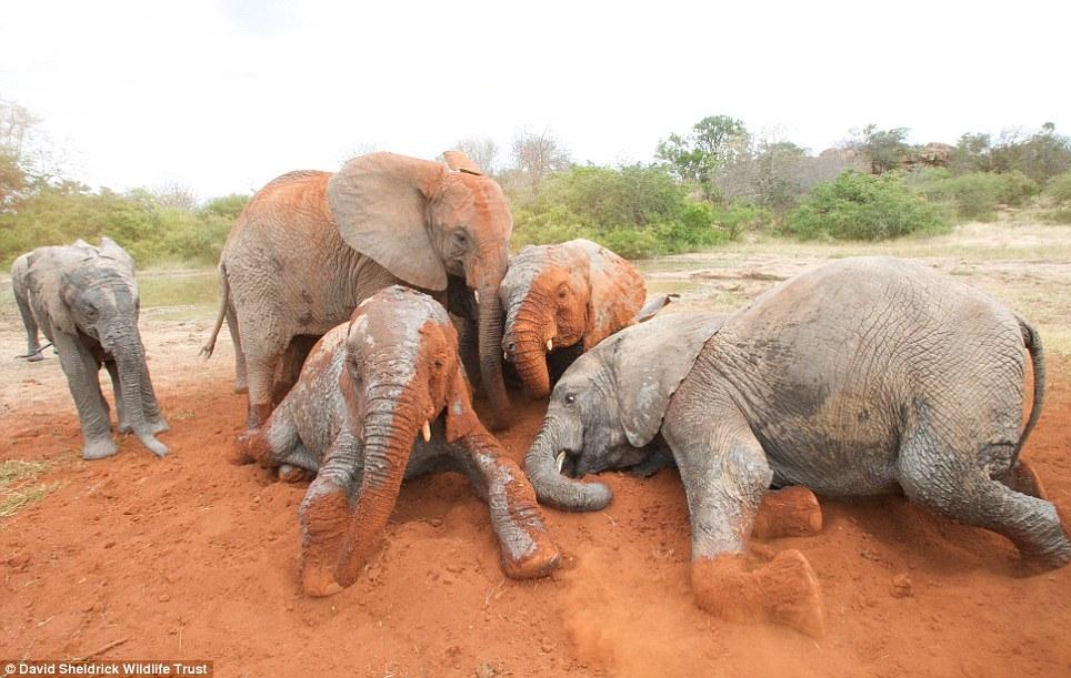 babyelefanter (11)