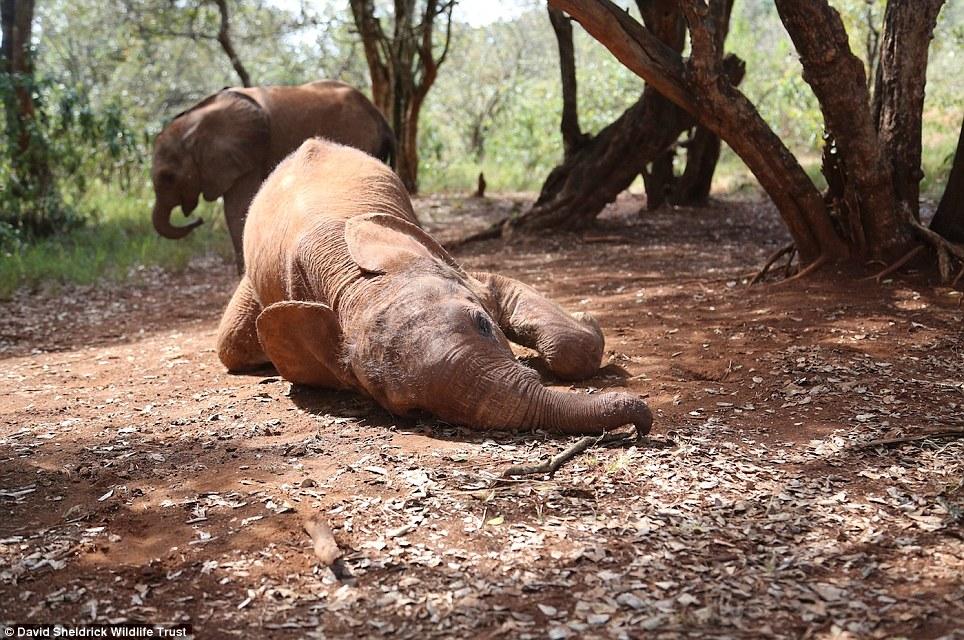 babyelefanter (2)