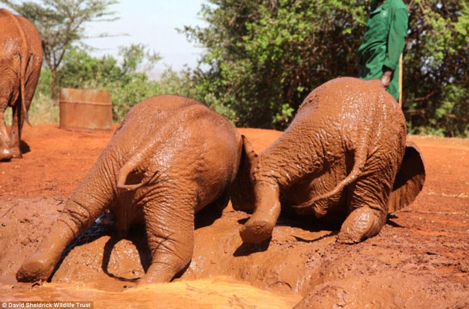 babyelefanter (3)
