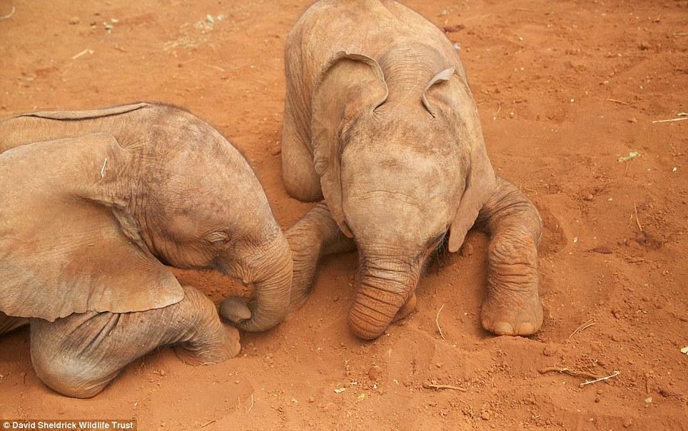 babyelefanter (8)