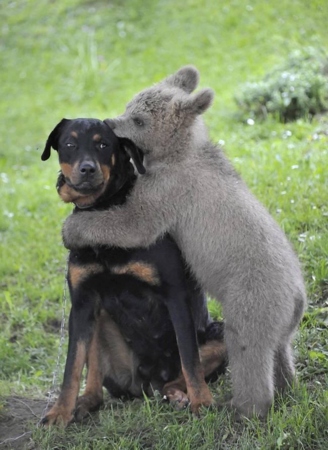 dyrevennskap (1)