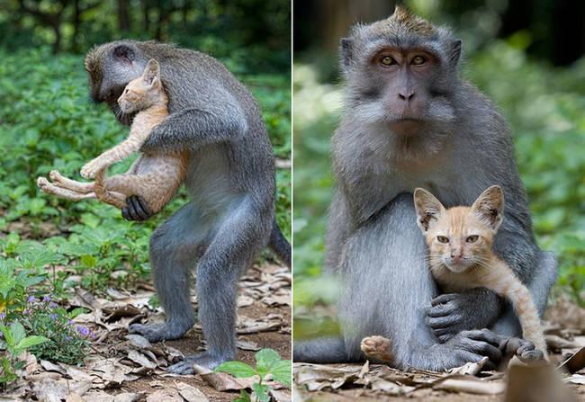 dyrevennskap (4)