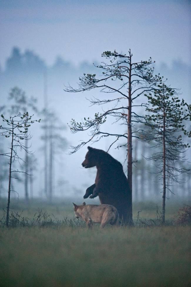 dyrevennskap (5)