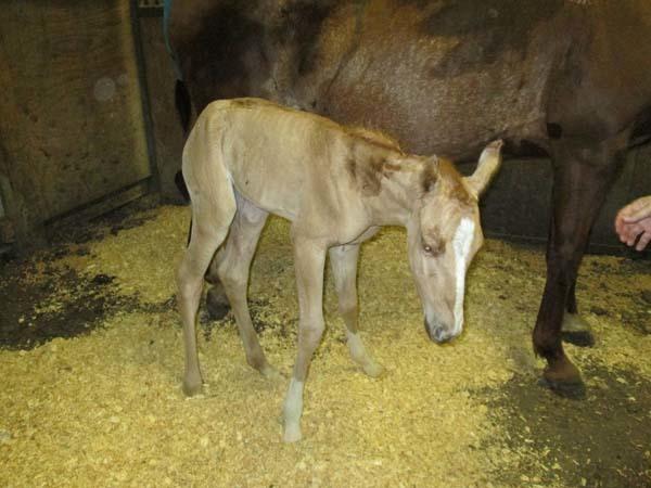 hest14