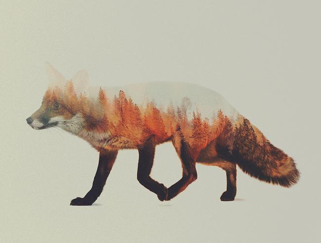 dyr-landskap (1)