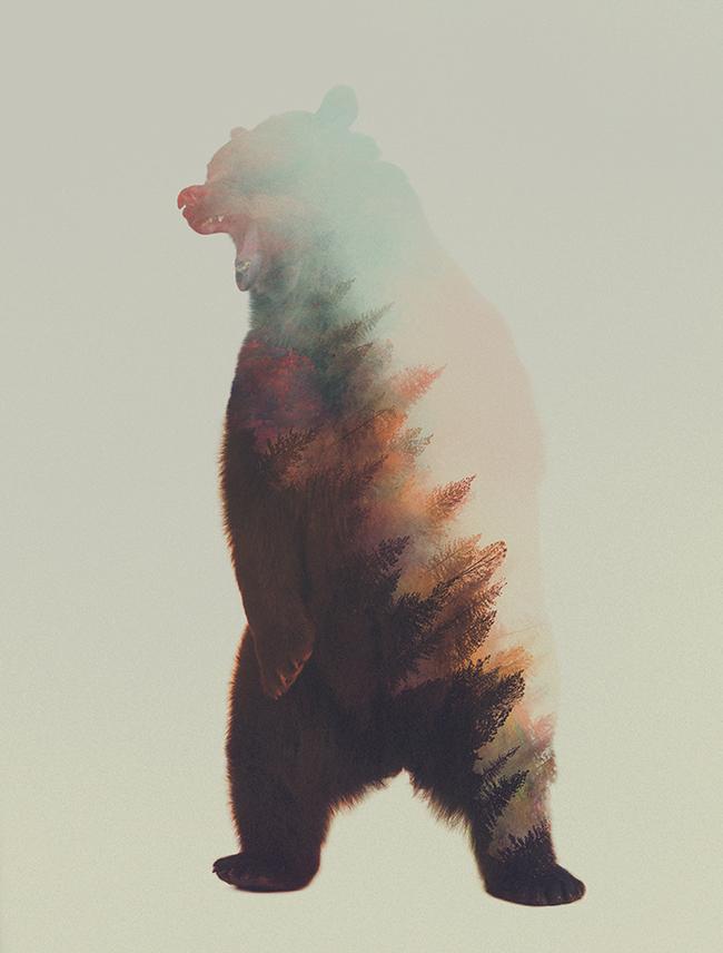 dyr-landskap (12)